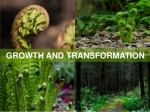 growth and transformation