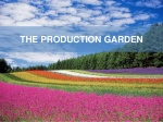 production garden